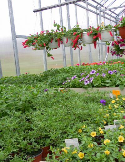 Zahradnictví (1)