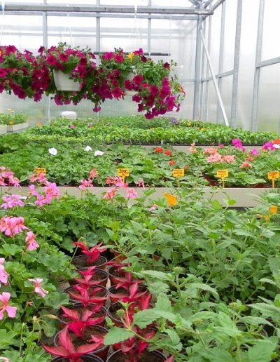Zahradnictví (2)