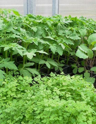 Zahradnictví (3)