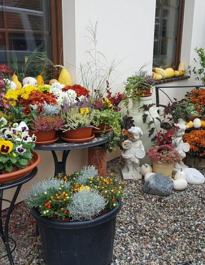 Zahradnictví (4)