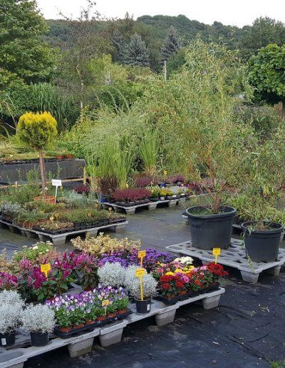 Zahradnictví (5)