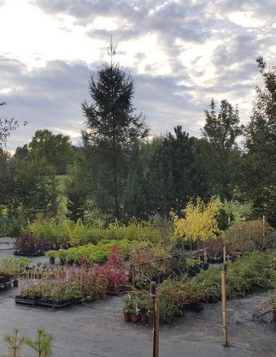 Zahradnictví (6)